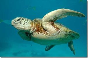 turtle-161e55b