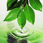 интересные факты на тему экологии