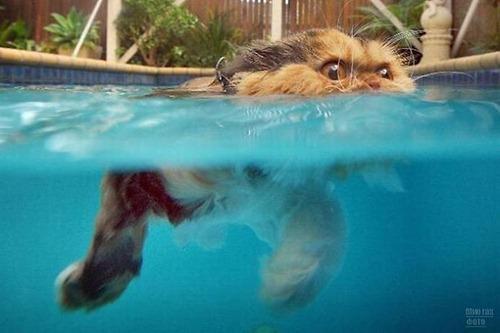 1277821483_swimming_cats_06-0