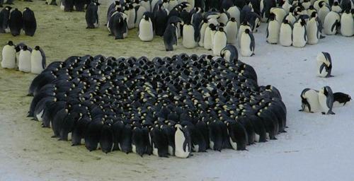 pingwiny_01