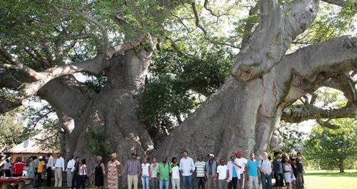 Big-Baobab-bar