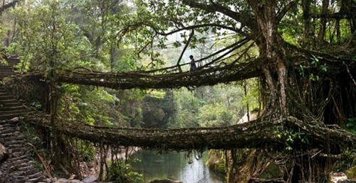 дерево-мост
