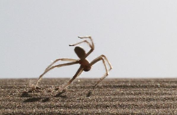 паук кувыркается