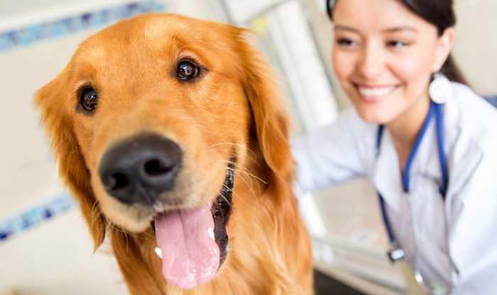 Здоровое питание – здоровая собака